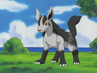Roger's Mightyena