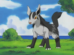 Roger Mightyena.png