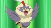 Ash's Rufflet