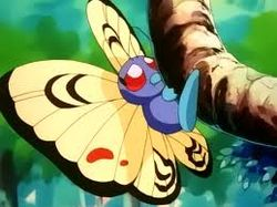 Jason's Butterfree.jpg