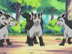 Roger's Mightyena.png