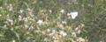 Miniatura de la versión del 23:44 5 mar 2013
