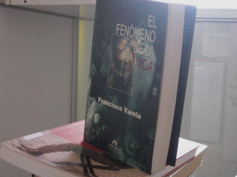 Archivo:FenóMeno de la Vida G 2719.JPG