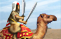 Elite camel warrior tap.png
