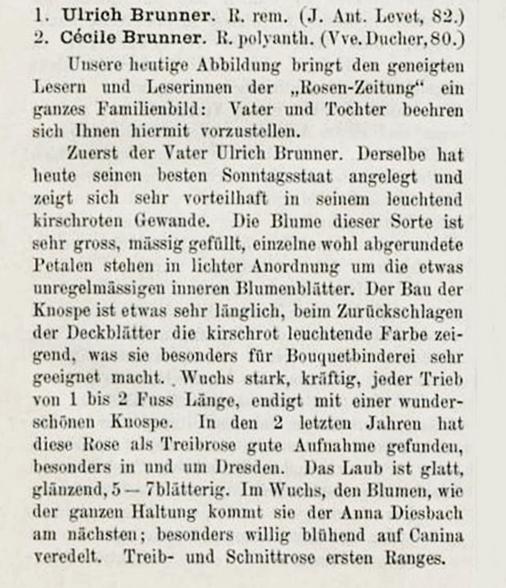 Ulrich brunner 1886 i.jpg