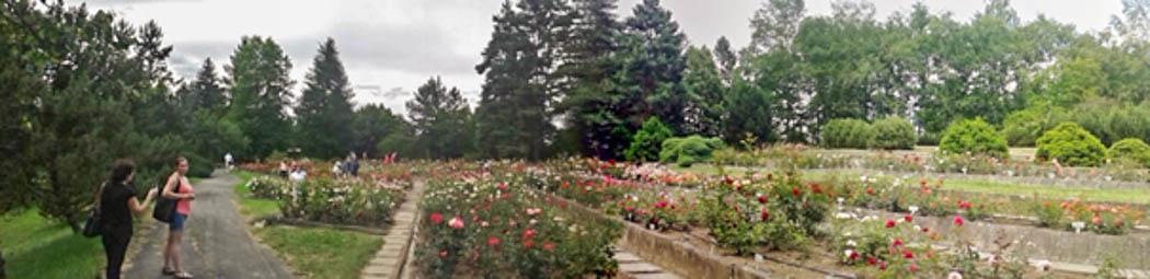 Arborétum Borová Hora 1-w.jpg