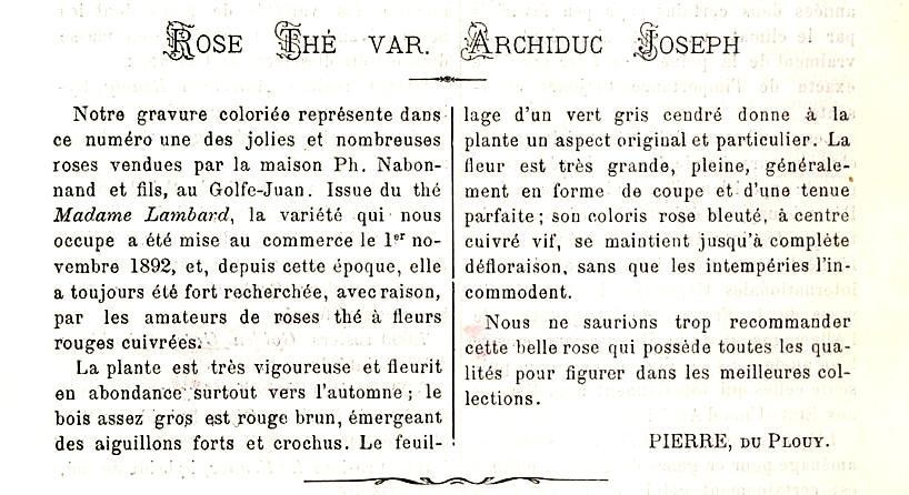 Archiduc Joseph t.jpg
