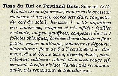 Rose du roi 274.PNG