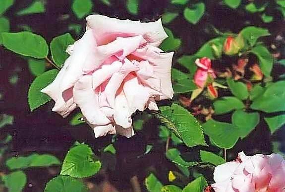 Kathleen Harrop filtered-3-g.jpg