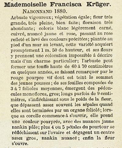 Melle francisca krüger-page.jpg