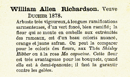 W. a. Richardson 368.PNG