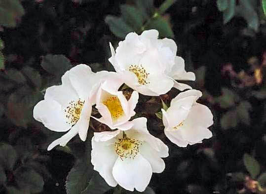 Belgradensis Kopie Kopie filtered-3-g.jpg