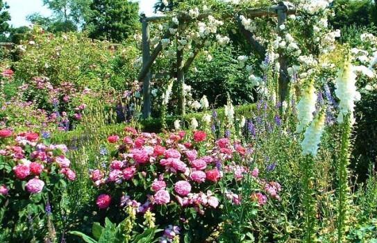 Mottisfont abbey gardens 552b8a02d251e9f1c257e3dba97f4b13.jpg