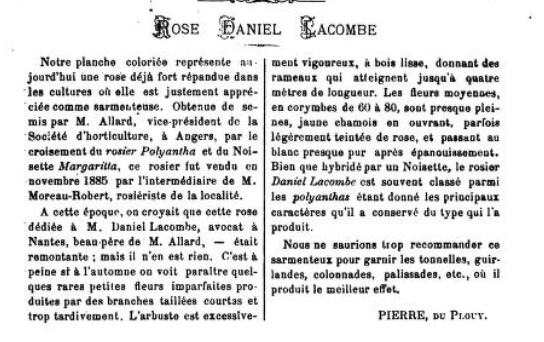 Daniel Lacombe, Journal des Roses 1897 S. 123.PNG