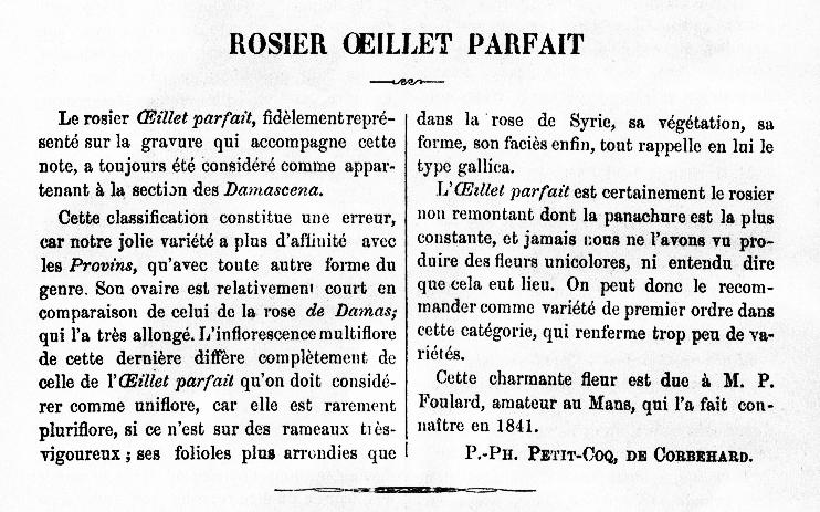 Oeillet parfait 1879.jpg