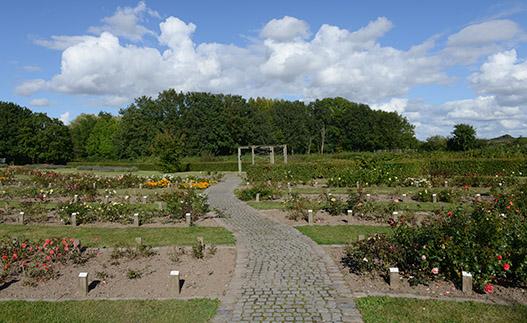Gerlevpark rosenbede.jpg