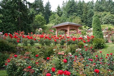 Portland International Rose Test Garden.jpg