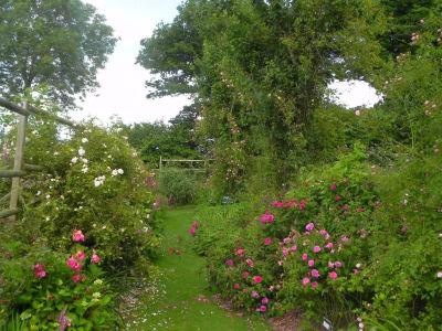 Jumaju Nouveau jardin, gpts et galliques.jpg