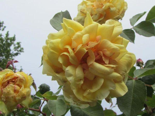 Lemon Pillar, Stéphane Barth, L'Hay 2.jpg