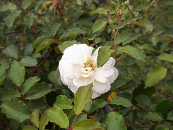 Davy Barr Prosperity bloom 03-25-11-w.jpg