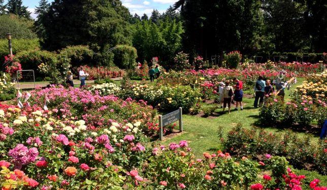 Portland-international-rose-test-garden-portland-o-730x425.jpg
