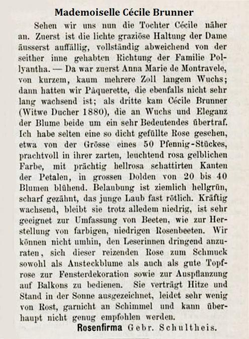 Brunner 1886 i -.jpg