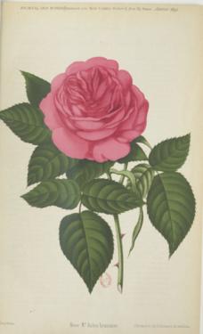 Monsieur Jules Lemaître, Journal des Roses 01.1891.PNG