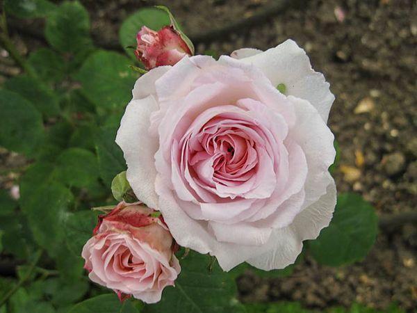 Bouquet de Marie, Stéphane Barth, L'Hay 1-w.jpg