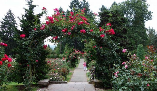Portland international-rose-test-garden-portland-or-730x425.jpg