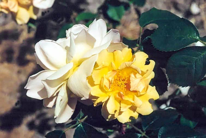 Golden moss filtered Kopie-3-g.jpg