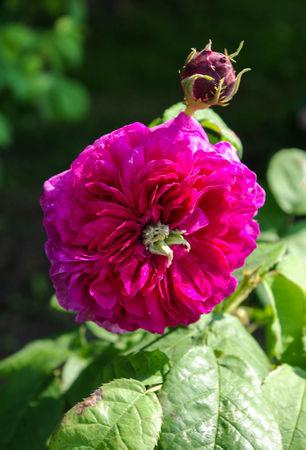 Fleur de Pelletier-Commer-IMGP0566-1-w.jpg