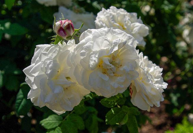 Mme Plantier-L'Hay-IMGP0639-1-w.jpg