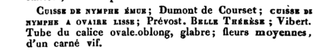 Cuisse de Nymphe emue, Manuel Complet de l'Amateur de Roses, 1836, M. Boitard, Seite 242.PNG