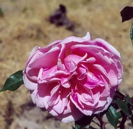 Jean Bach Sisley filtered-3-g.jpg