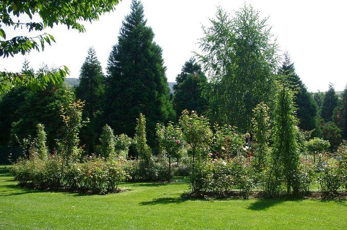 Ettenbühl Gärten (2)-w.jpg