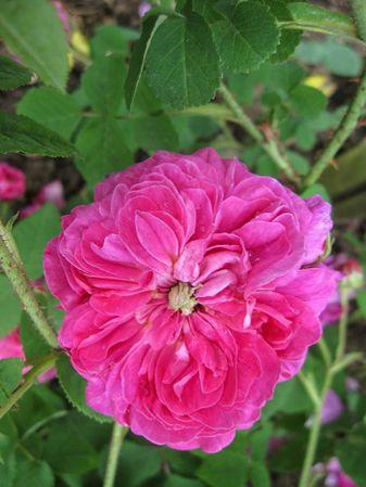 Fleur de Pelletier, Stéphane Barth, L'Hay 1-w.jpg