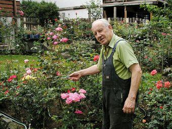 01 George&roses05.jpg