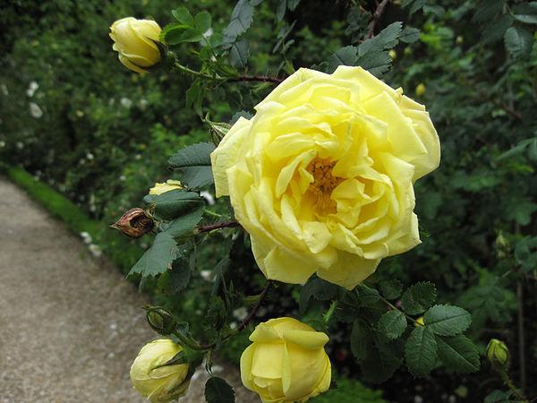 R.pimp. Double Yellow, Stéphane Barth, L'Hay 3.jpg