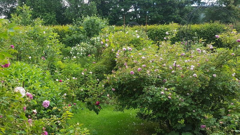 RB Garten10.jpg