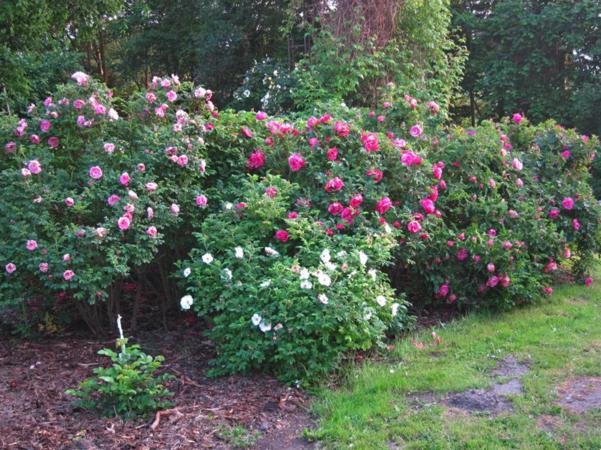 Garten 1.PNG