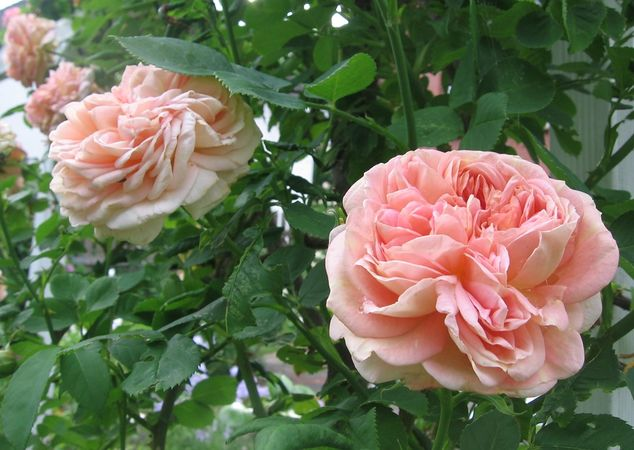 7 juin 2012 - 4 017 - Kopie.JPG