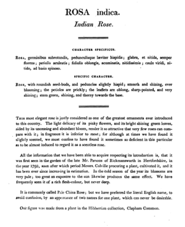 Rosa indica, Roses or a Monograpg of the Genus Rosa, Text.PNG