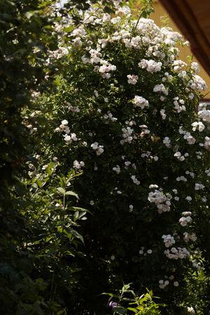 Jeanne du Volcan 2014-3a.jpg