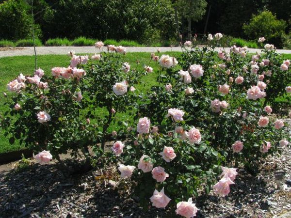 Jean Ducher, Adelaide Botanic Garden 2.jpg