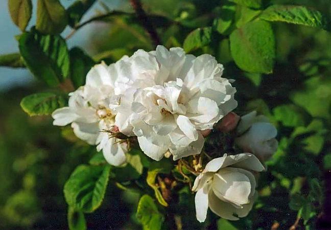 Quatre saisons blanc mousseux filtered-3-g.jpg