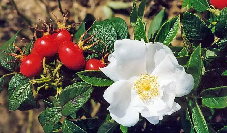 Nyveldt's white filtered-3-g.jpg