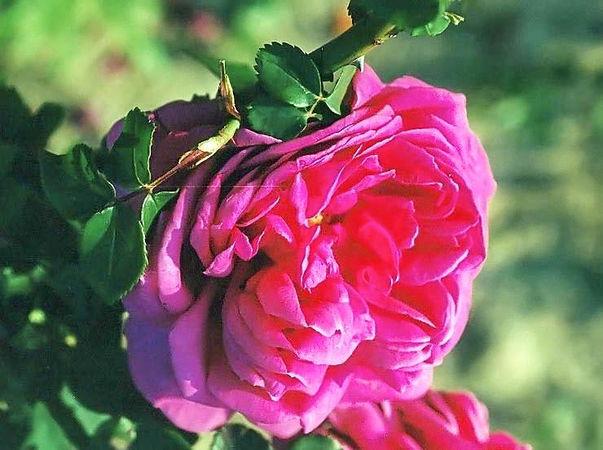 Mme.de Sevigne filtered-3-g.jpg
