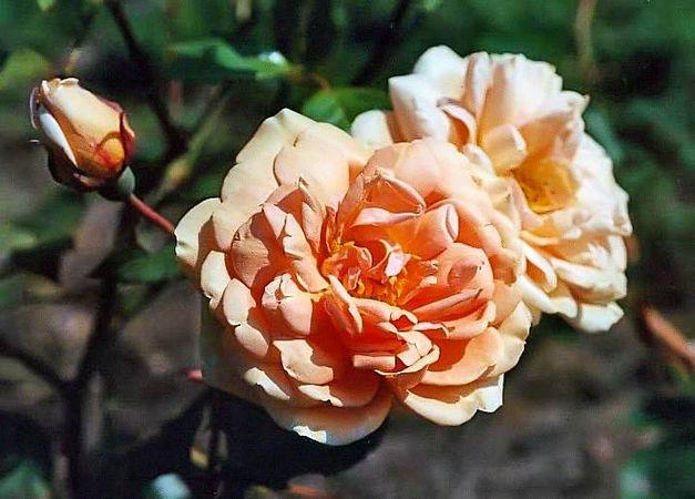 Mme jules gravereaux filtered Kopie-3-g.jpg