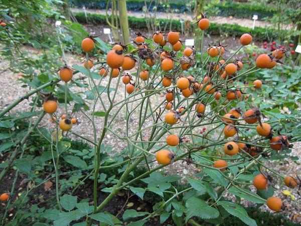 Bennet's Seedling, Stéphane Barth, L'Hay 5-w.jpg