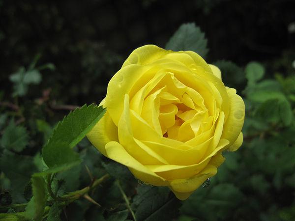 R.pimp. Double Yellow, Stéphane Barth, L'Hay 2.jpg